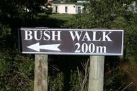 Pongaroa Bush Walk